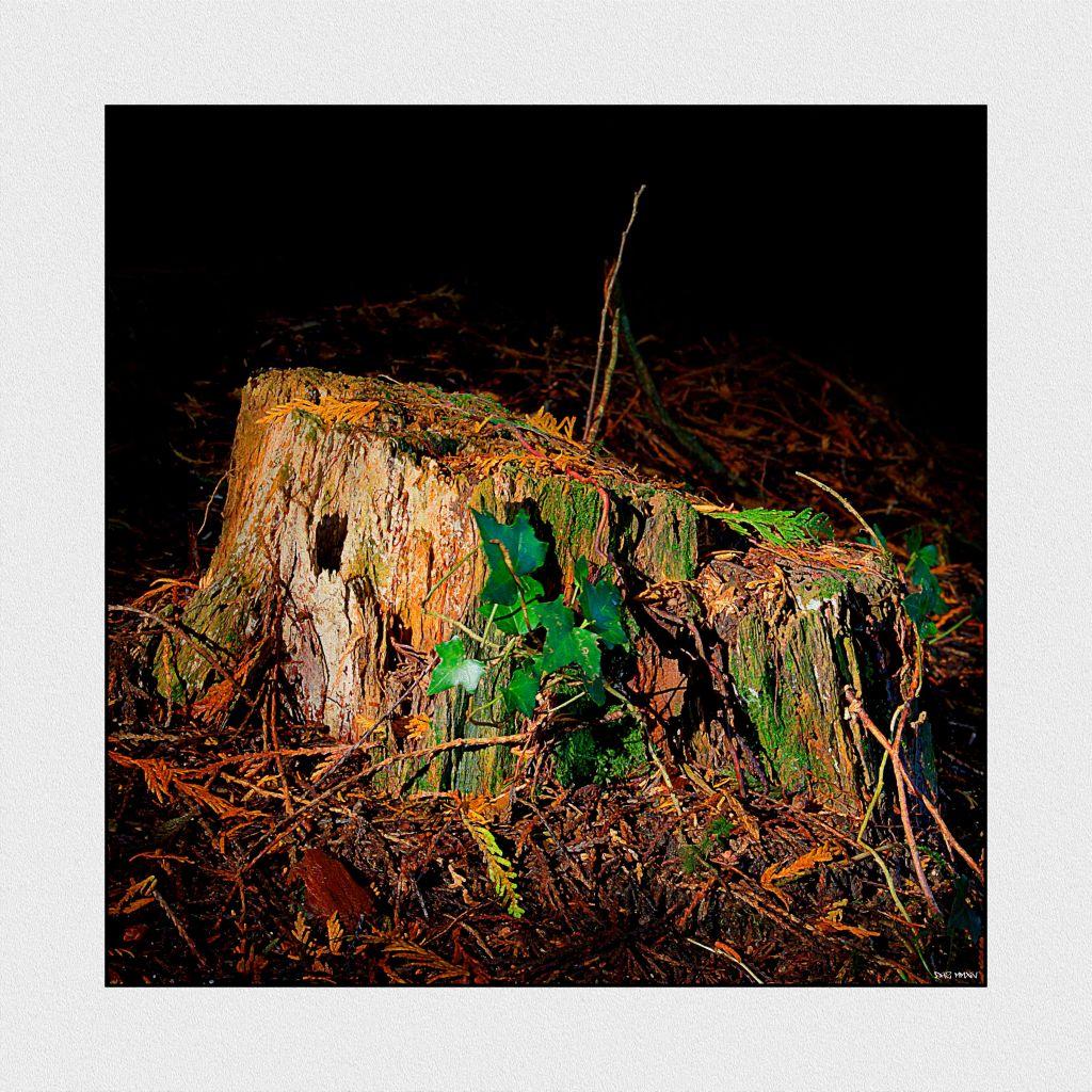 stump low