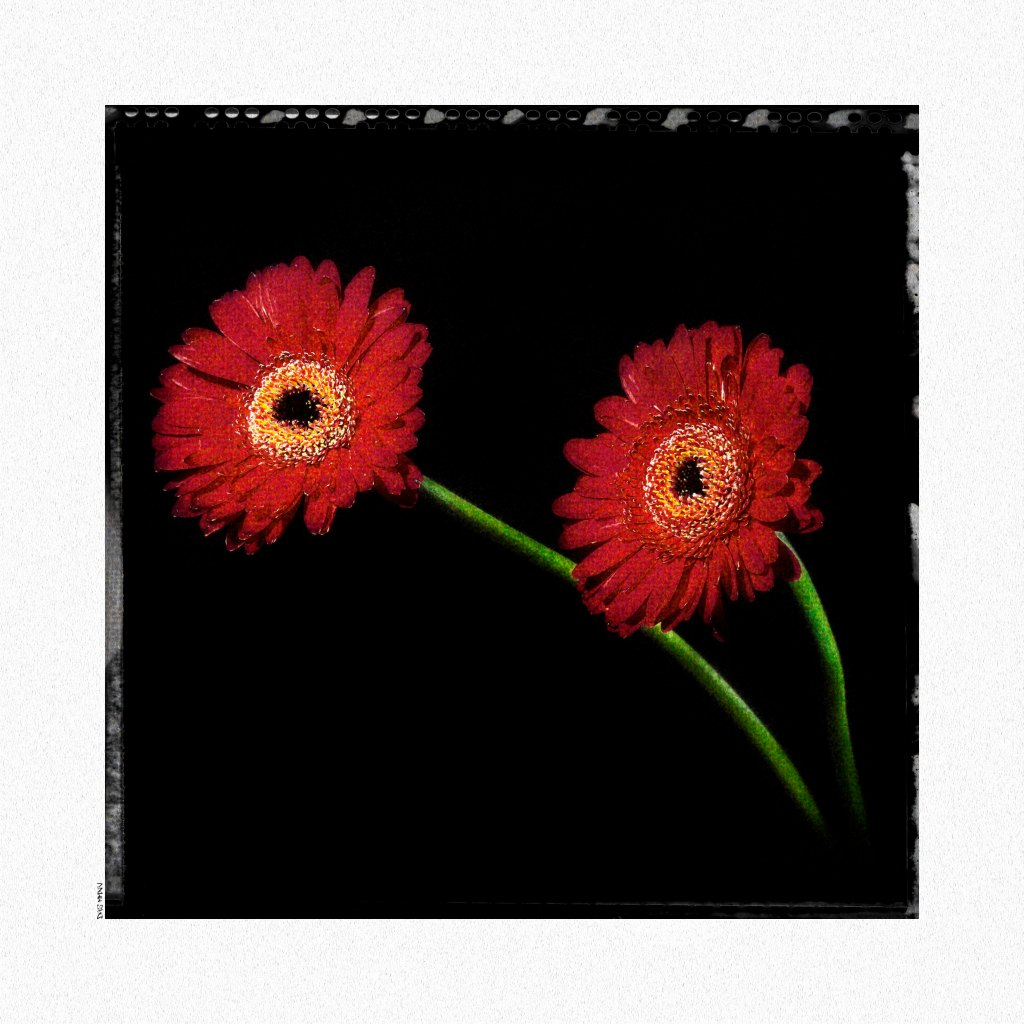 Flowers Polaroid low