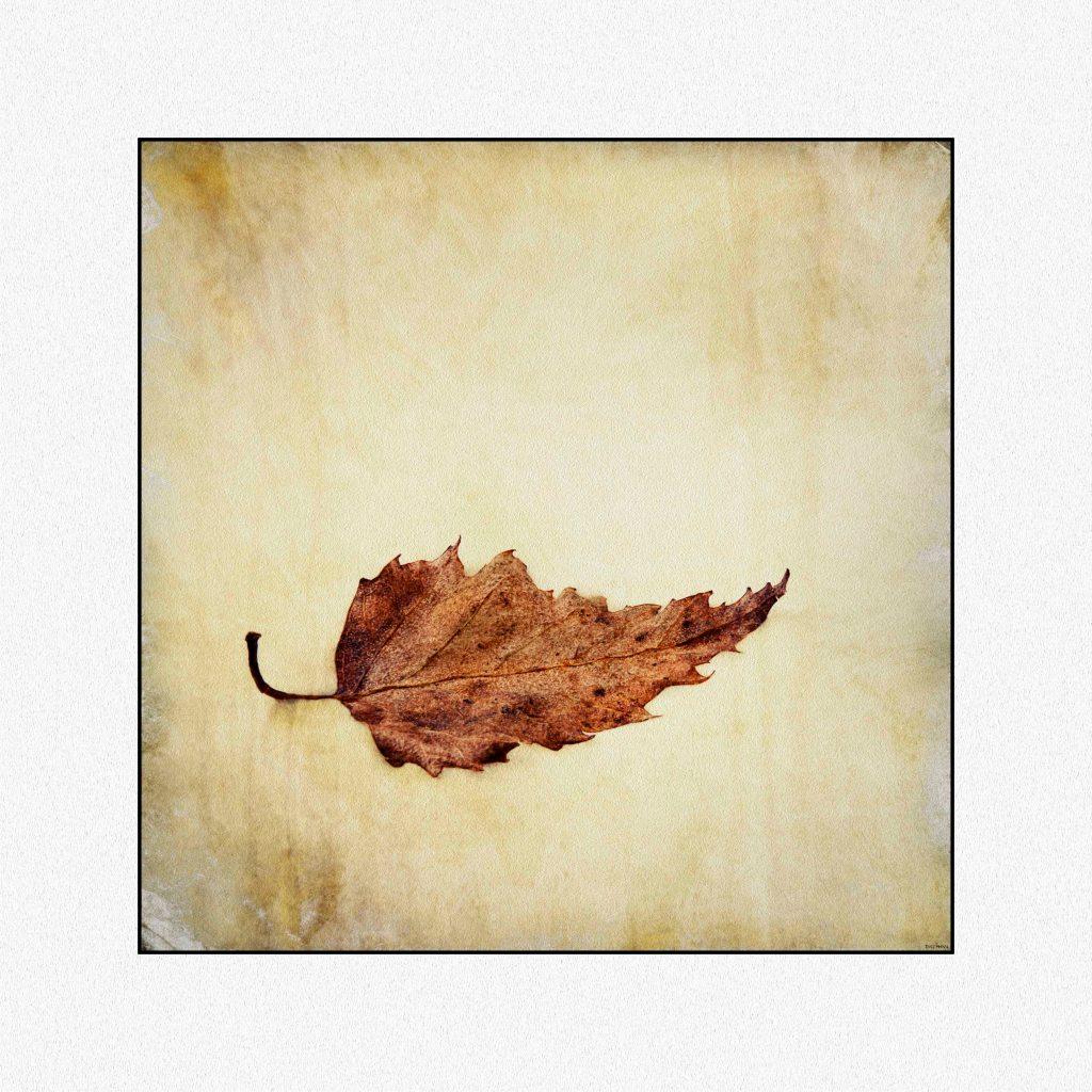 leaf low