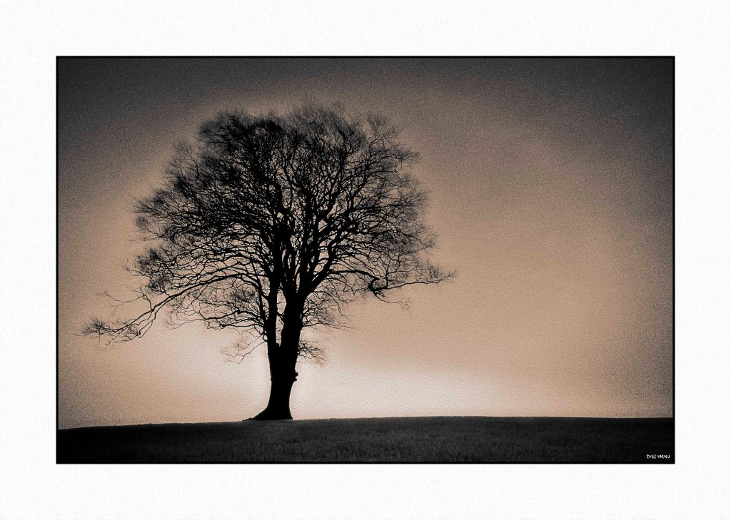 Tree low