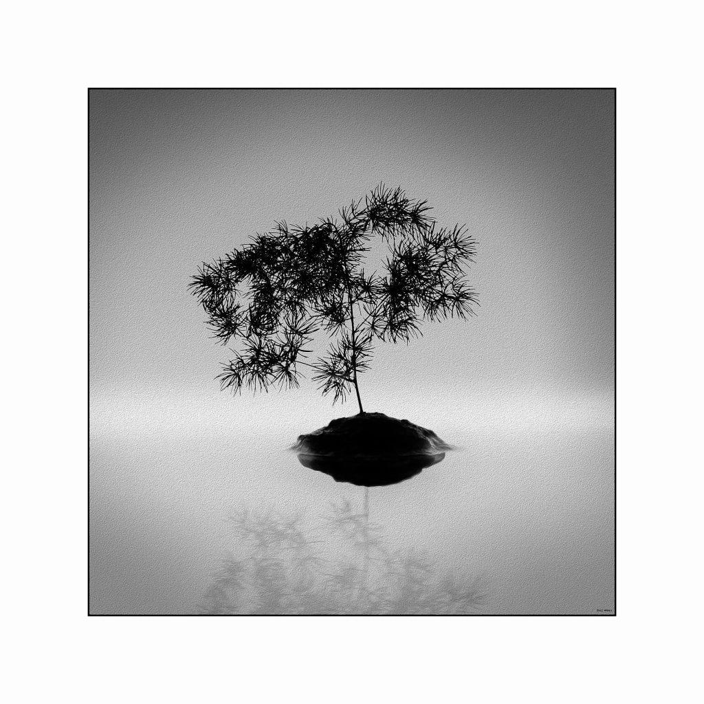 Tree island low