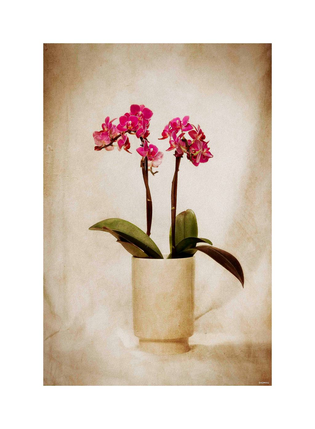 Orchid low