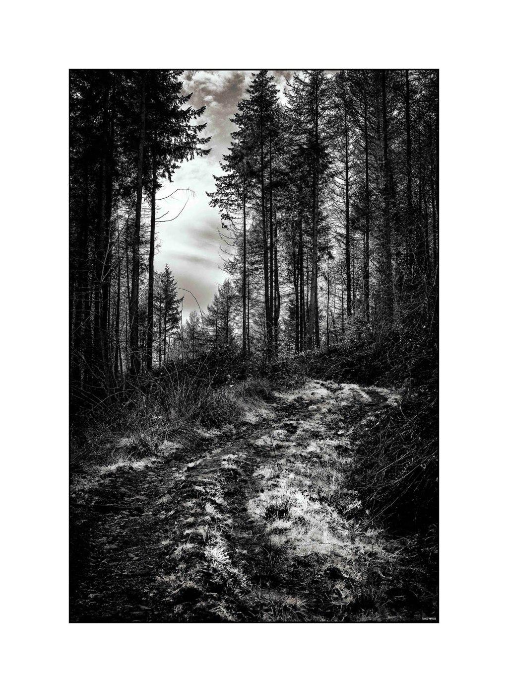 Llwyn Celyn Forest - Cardiff 2016 low srgb