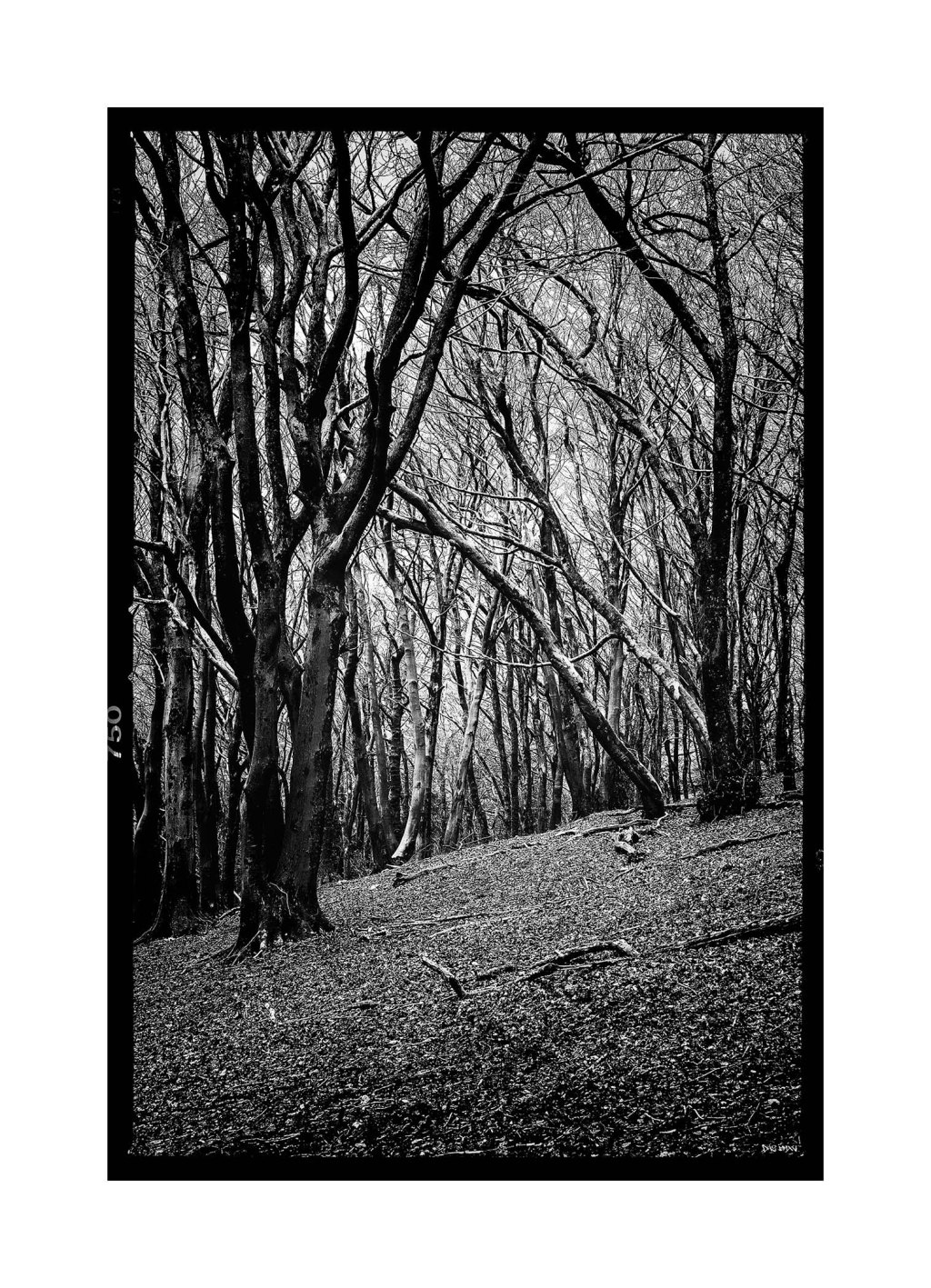 Wenallt wood - Cardiff 2016 low srgb