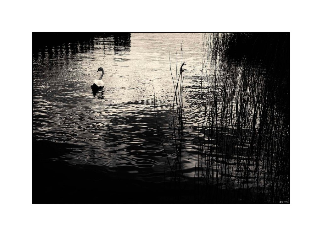 Wetlands - Cardiff Bay 2016 low srgb