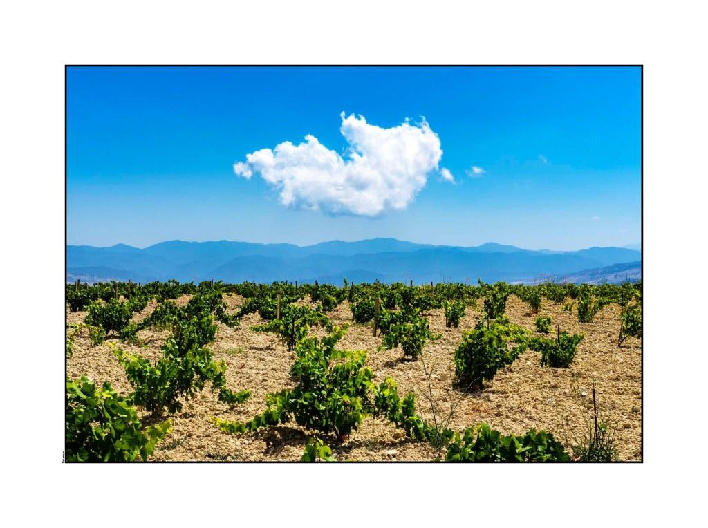 Vines-Cyprus 2016 Low